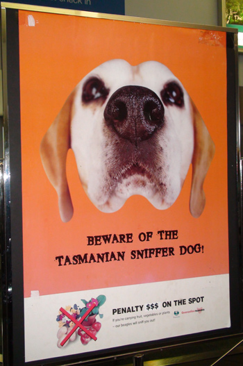 Beware Tasmanian Sniffer Dog at Airport