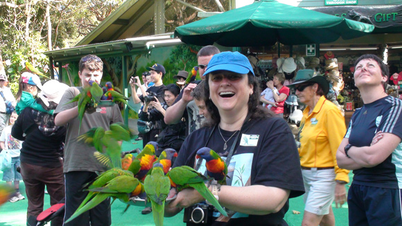 Rainbow Lorikeets Currumbin Wildlife Sanctuary
