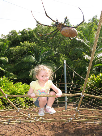 Gigantic Spider Currumbin Wildlife Sanctuary